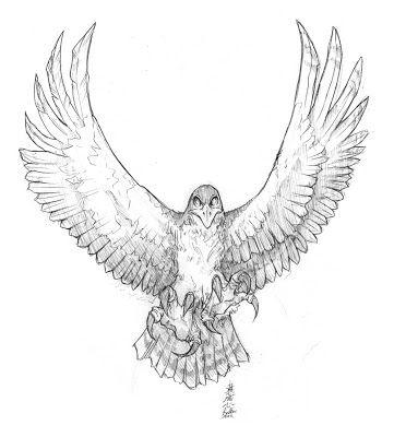 Crips Tattoo: Hawk, designed by me. Needles: 5RL | 13M