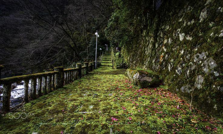 Pathway.. - Hakone Japan