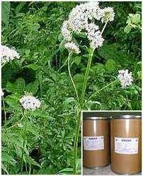 Botanical Name: Valeriana wallichi Common Name: Indian Valerian, Valerian, Valerian Jatamansi, Taggar Family: Valerianaceae Parts Used: Root (Rhizome)  Medicinal Properties: Antirheumatic, antiseptic,  astringent, carminative, cicatrizant, depurative, diuretic, ammanagogue, nervine, parasiticide, rubificant, sedative, stomachic, sudorific, tonic, vulnerary  Uses: Valerian reduces insomnia, mild anxiety or restlessness, muscle spasms and cramping,menstrual cramps, intestinal cramping/colic