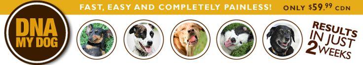 DNA My Dog ($59 CDN)