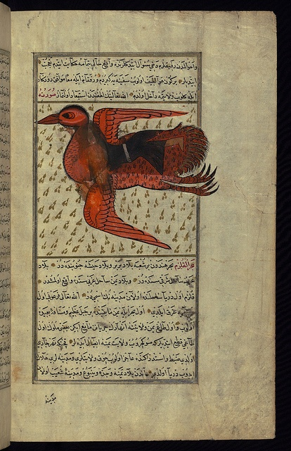 Turkish version of the Wonders of creation, A huge bird carries a man on its back, Walters Manuscript W.659, fol. 159b