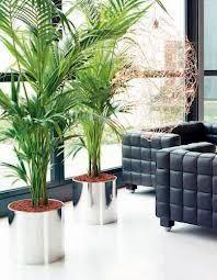Озеленение офисов, ресторанов, гостиниц и фитодизайн | Компания MXM - ландшафтный дизайн и озеленение