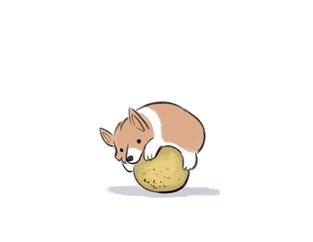 corgi hugging a cantaloupe. so adorable i kinda want it tattooed on me.