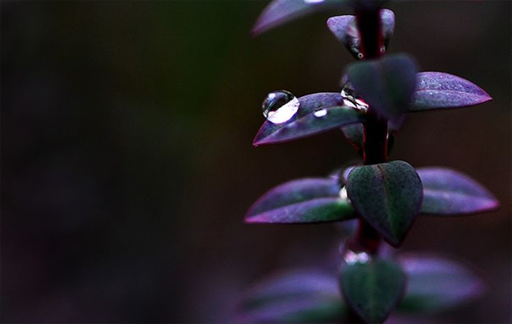 'Droplet' - Nature Up Close Flowers (#waterdrop, #plants #photography #nature