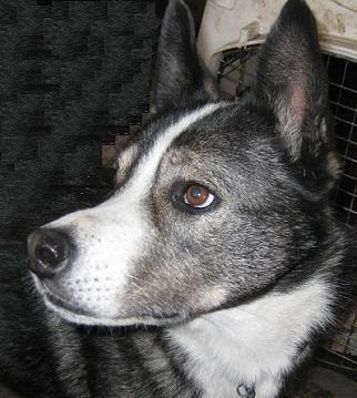 Adopt A Dog Vancouver Bc