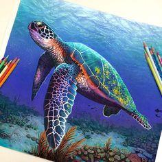 Morgan Davidson-dessin-couleur-tortue