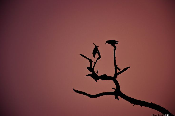 The flies silhouette in the sunset  By Midou Dambri