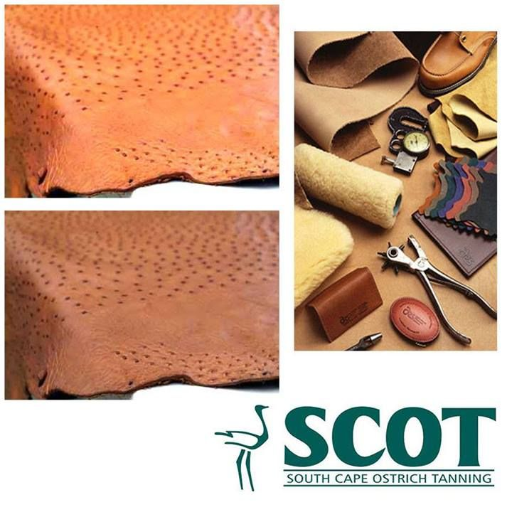 Ostrich leather is considered among the finest and most durable leathers in the world, and is sought after by many major fashion houses. #ostrichleather #facts