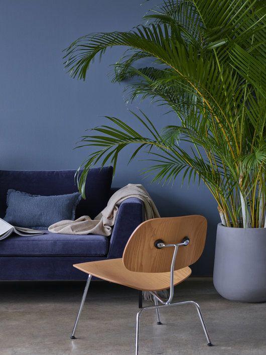 Stor og kraftig areca palme gir et frodig uttrykk.