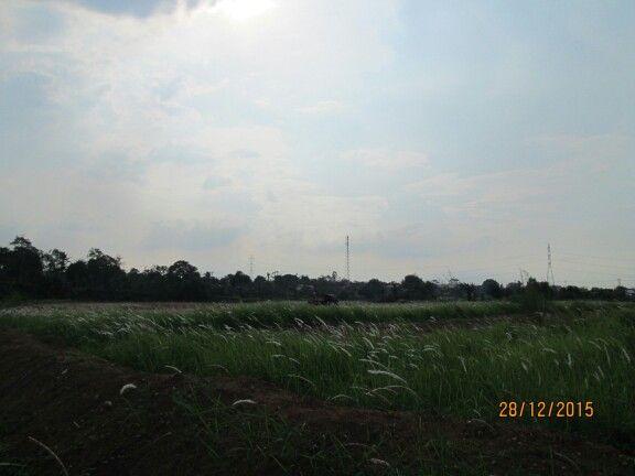 Bekasi bhumiphala, B.G.  #sun #road #residential #house #travel #nature #life #simplicity