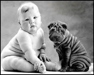 <3: Anne Geddes, Shar Pei, Soul Mates, Baby Fat, So Cute, Sharpei, Baby Dogs, Baby Puppies, Weights Loss