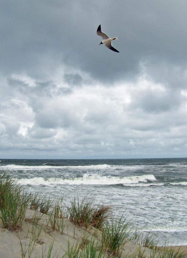 A Seagull in the Storm