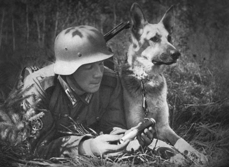 Ww2 • German Soldier with Dog & Message
