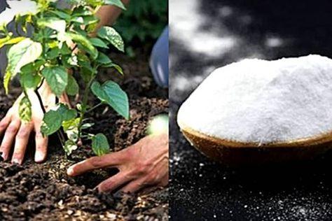 9+1 fantasztikus kerti praktika szódabikarbónával, amit neked is ki kell próbálnod!