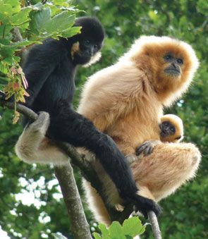 and possibly Monkey World...