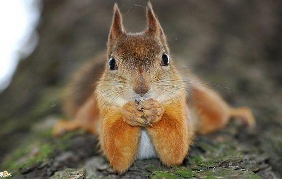 Il pose le petit écureuil :)