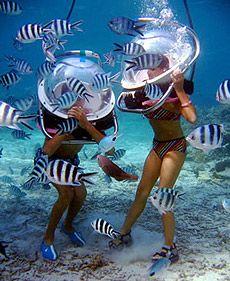 this would be so exciting!Fun Underwater, Mauritius Honeymoon, Honeymoons Activities, Wanderlust Travel, Summer, Mauritius Diving, Ocean, Sea Walks, Places