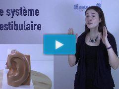 Le système vestibulaire | Les 7 sens | Capsule en ergothérapie | Regard9