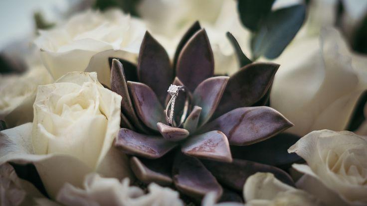 Wedding Rings filomenamx.com