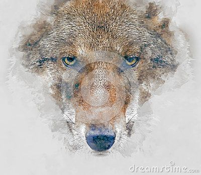 Wolf watercolor art for your design.