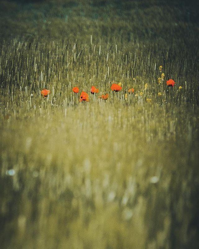 #Repost @huseyintaskin  Zarifler #green #flowers