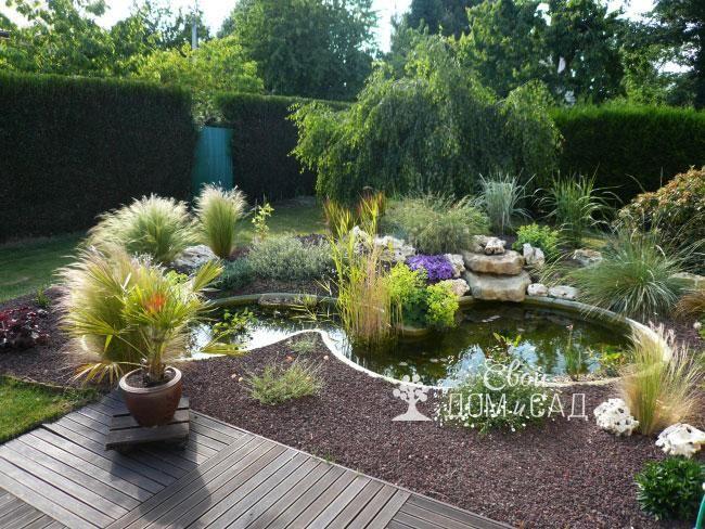 Водные растения у маленького водоема в саду. Виды водных растений