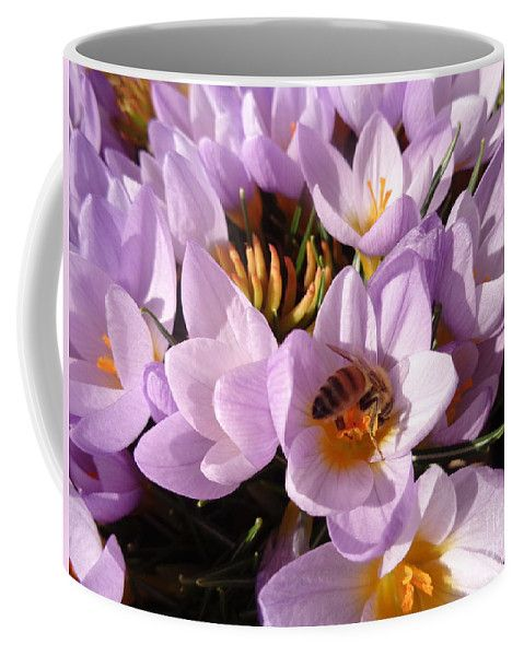Pink Coffee Mug featuring the photograph Pink Crocus by Lyssjart Sj