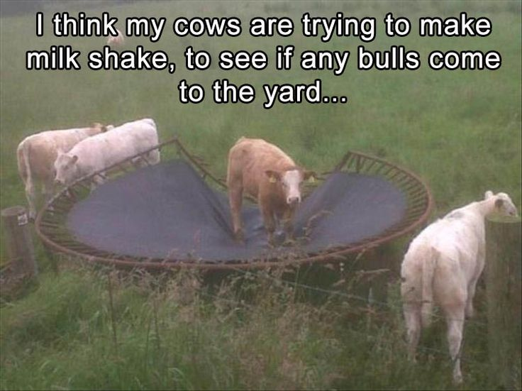 ooh! hope those are some of those chocolate cows!