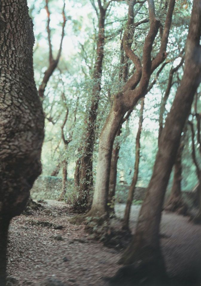 "JoAnn Verburg, Sacred Trees (Under Water), 2000, Chromogenic color print, 59 x 42"" (149.9 x 106.7 cm), Collection the artist, © 2007 JoAnn Verburg"