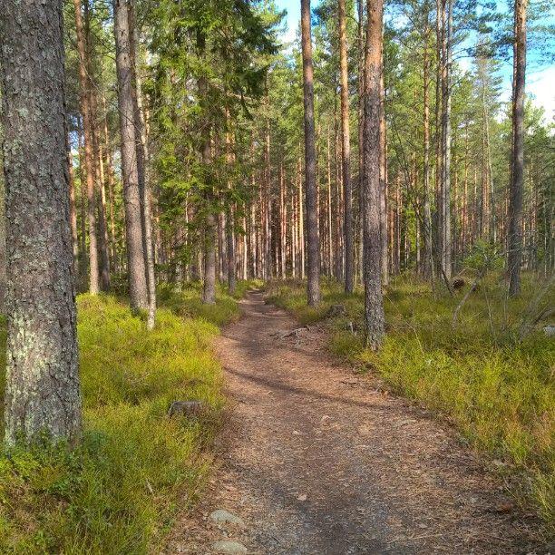 Porin metsä kutsuu ulkoilemaan. #Pori #kansallinenkaupunkipuisto #porinmetsä #metsä #kangasmetsä #ulkoilu #lenkkeily #retkeily #kuusi #mänty #polku #auringonpaiste #luonto #thisisfinland