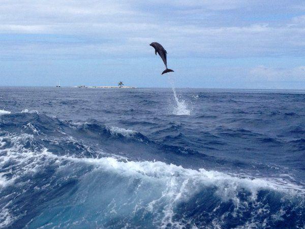 Flying dolphin, Rangiroa, French Polynesia