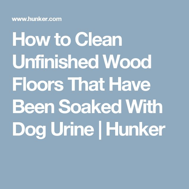 best 20+ dog urine ideas on pinterest | dog urine remover