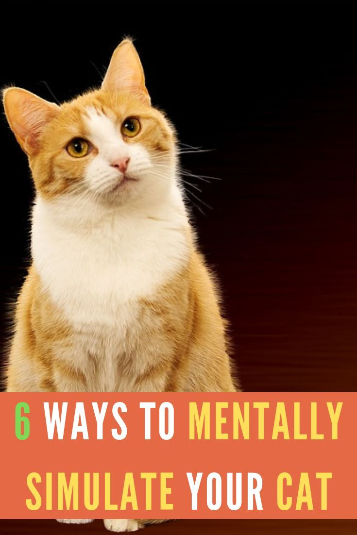 Tips To Keep Your Cat Mentally Stimulated Cats Pet Care Dogs Cat Care