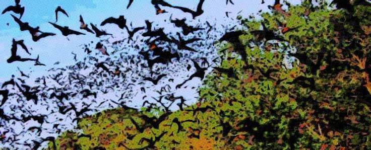 Ahuyentar a los murciélagos con naftalina ¿es posible?  http://www.infotopo.com/exteriores/fumigaciones/ahuyentar-los-murcielagos-con-naftalina/