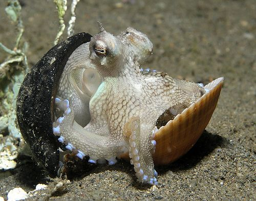Coming out of her shell by Nick Hobgood, via Flickr