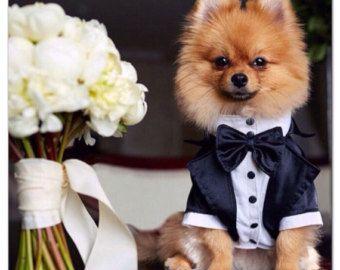 Perro ropa Formal traje de boda para perro con por AnnaHappydog
