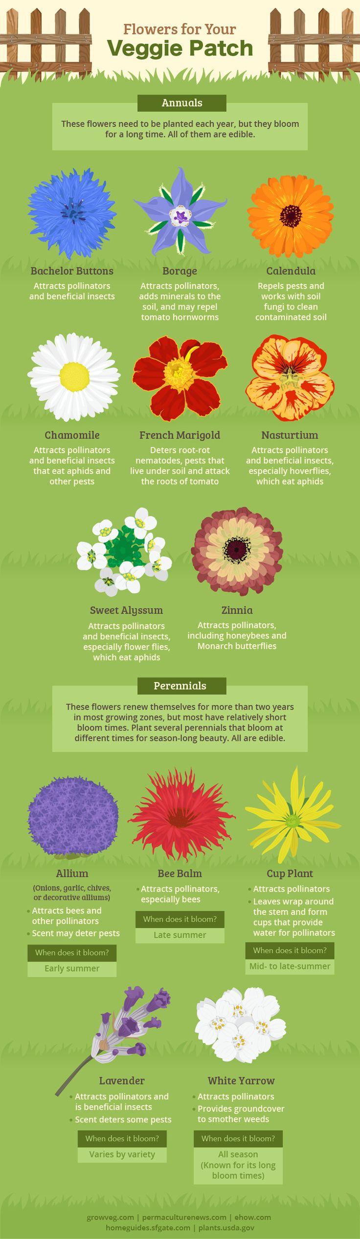 Des fleurs pour le jardin compagnonnage des plantes et les abeilles
