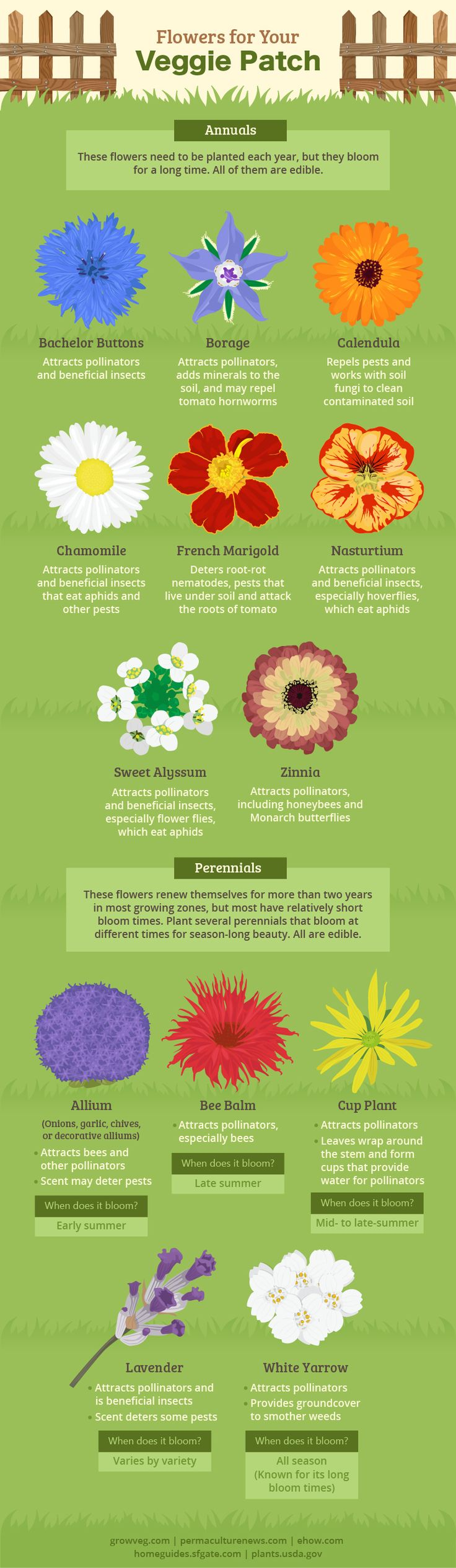 Companion Planting Herbs U0026 Flowers. Companion GardeningVegetable ...