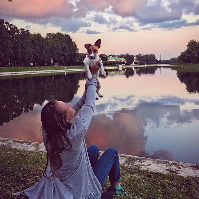 джек рассел терьер щенок jack russell terrier puppies  funny jrt дрт щенки