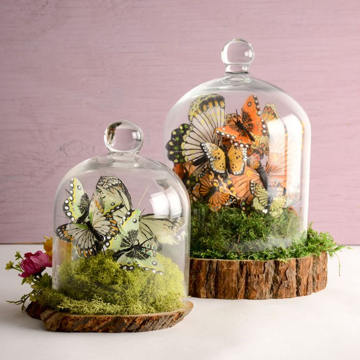 Butterfly dome - terrarium - butterfly decor - spring decorating