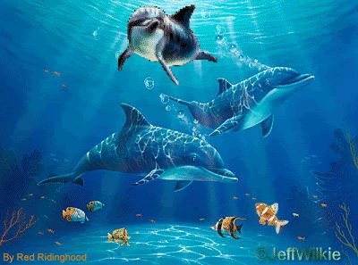 Animated dolphins | Dolphins.gif picture by glassiceprincess - Photobucket