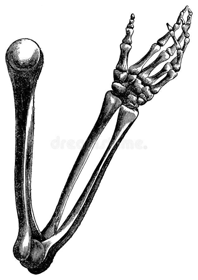 7 best Ben Motiv images on Pinterest | Anatomie, Anatomie des ...
