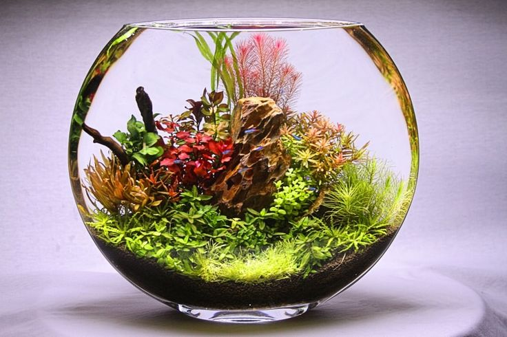 167 Best Planted Nano Aquariums Images On Pinterest Nano