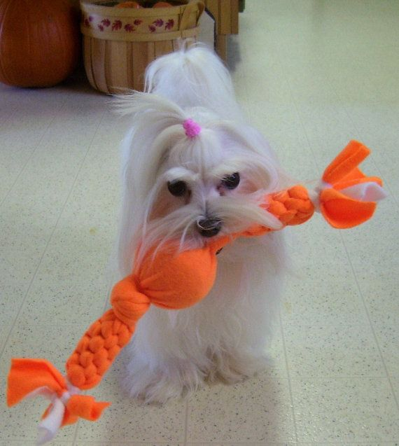 Make Dog Tug Toy: 75 Best 4pets Knot = Knotted For Pets: Dog Leash, Cat Bed