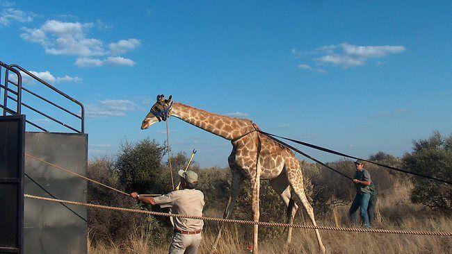 Game on South African safari