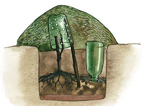 ОЧЕНЬ МНОГО ИНТЕРЕСНОГО О ВИНОГРАДЕ http://www.supersadovnik.ru/text/vinograd-kak-uhazhivat-s-vesny-do-pozdnej-oseni-1003449