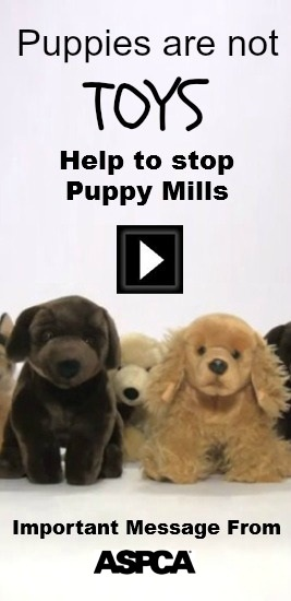 Why we should never, ever shop at a pet stores that sell puppies: Most pet store puppies come from puppy mills—large scale breeding operations where dogs live in horrible conditions and never receive love.  Every time we buy anything from a pet store that sells puppies, we are supporting this cruel industry.  Please share this video on Facebook and Twitter—and kindly ask them to share it, too. We're counting on your help to reach millions of people with this message…