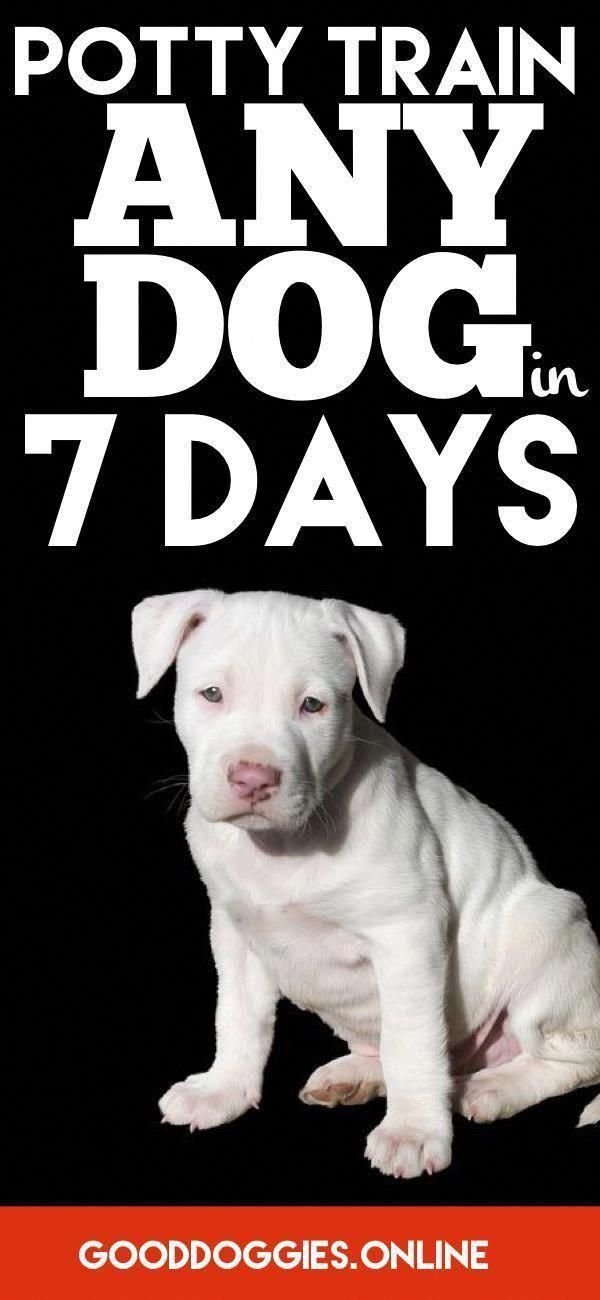 How To Potty Train Your Dog In 7 Days Or Less Dog Training