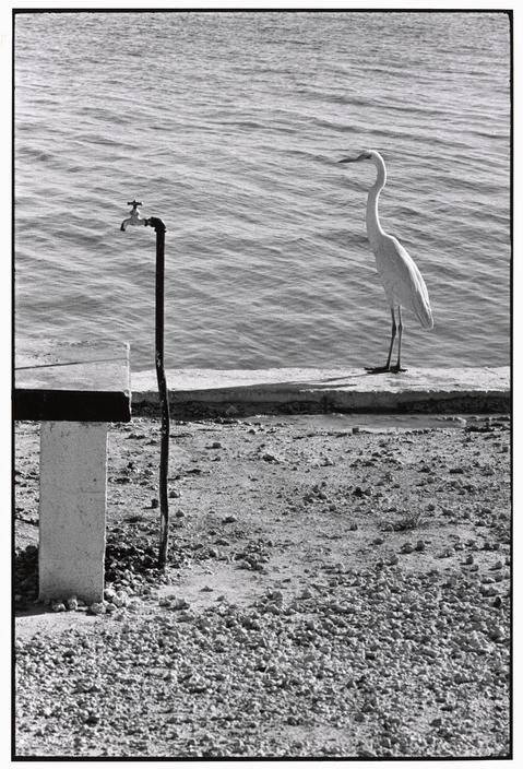 Elliott ERWITT :: Florida Keys, US, 1968