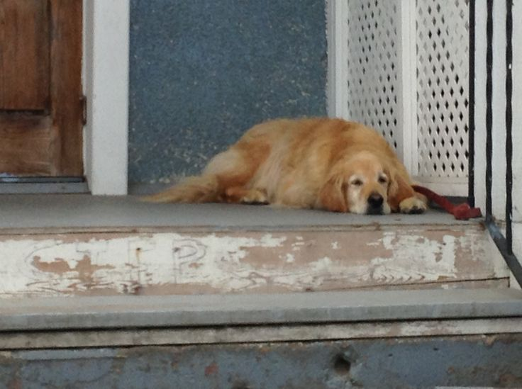 One of our furry friends makes himself at home on the steps of the Armstrong Hotel :)